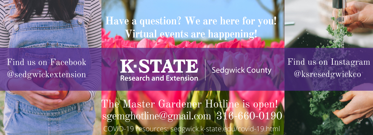 K-State Research and Extension — Sedgwick County virtual events are happening.
